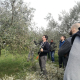 Pruning olive trees workshop2018